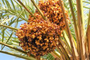 Palmen winterfest machen