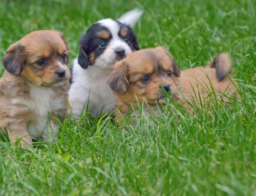 Welpenlaufstall und Hundezwinger im Garten