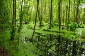 Dschungeloptik, ein beliebtes Motiv für Fototapeten. Foto: nore_view via Twenty20